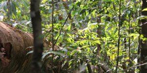 Dia Mundial do Meio Ambiente e o manejo florestal responsável do FSC
