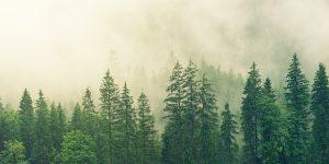 FSC® discute o uso da madeira no design e na arquitetura