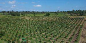 Cashback sustentável que une ganho financeiro ao ambiental